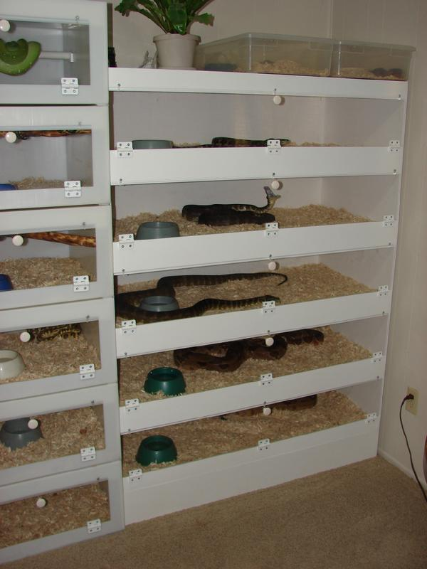 1000 Images About Reptile Enclosures On Pinterest